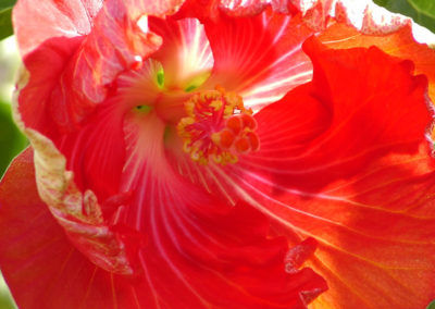 010_Flowers