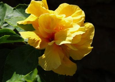 013_Flowers