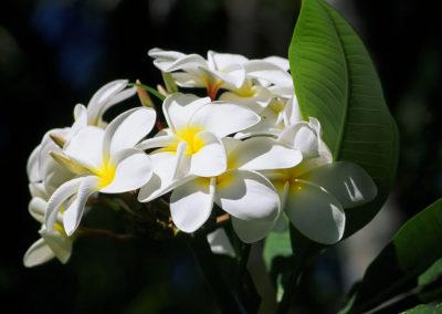 018_Flowers