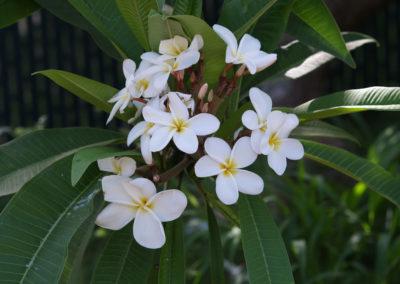 021_Flowers