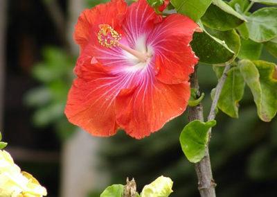 023_Flowers