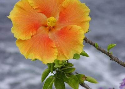 024_Flowers
