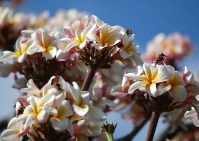 029_Flowers