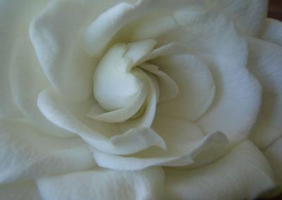 030_Flowers