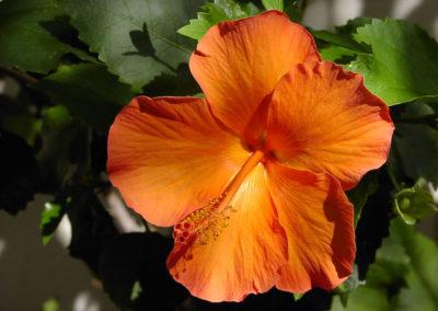 032_Flowers