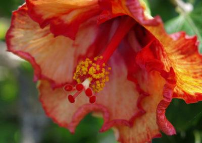 034_Flowers