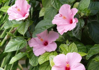 039_Flowers