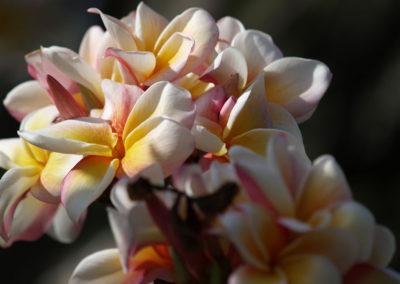 041_Flowers