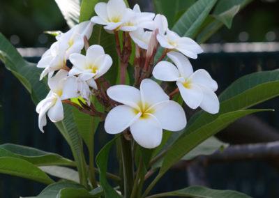 042_Flowers