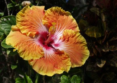 043_Flowers