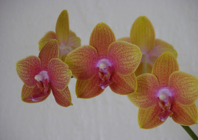 044_Flowers