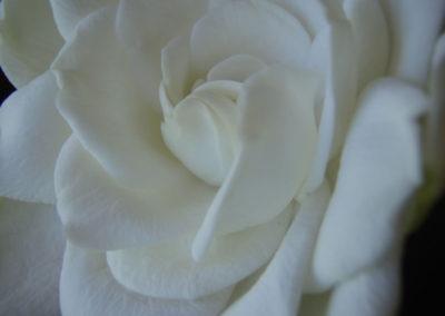 045_Flowers