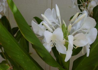 049_Flowers