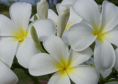 053_Flowers