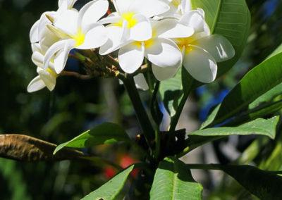 057_Flowers