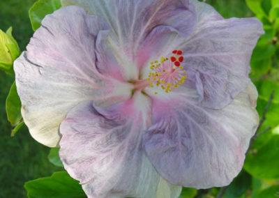 064_Flowers