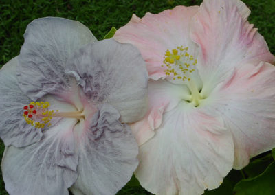 071_Flowers