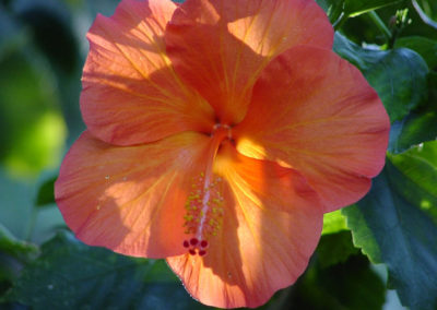 073_Flowers