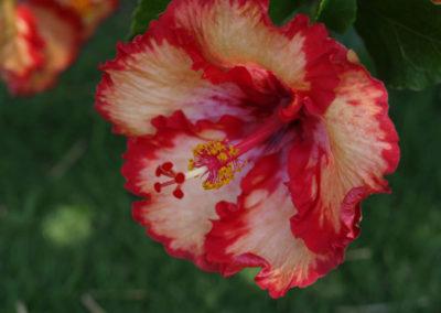 076_Flowers