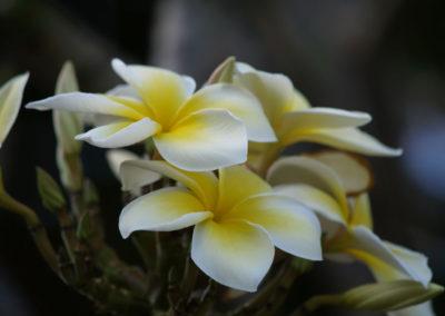 077_Flowers