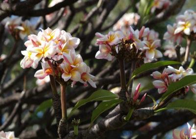 078_Flowers