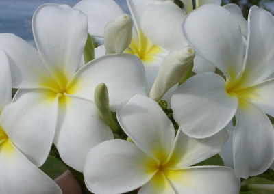 082_Flowers