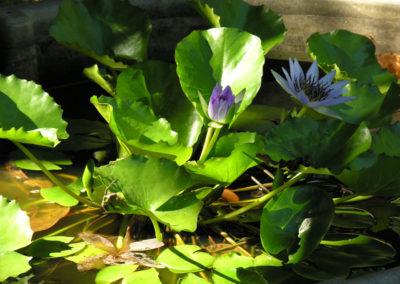 085_Flowers