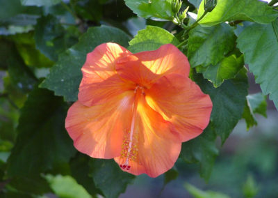 091_Flowers