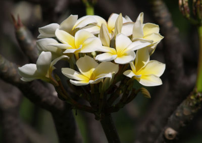 095_Flowers