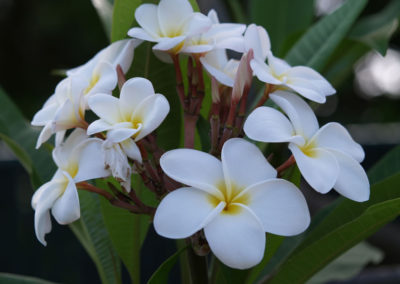 096_Flowers