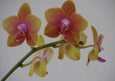 098_Flowers
