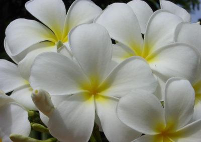 106_Flowers