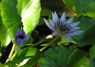113_Flowers