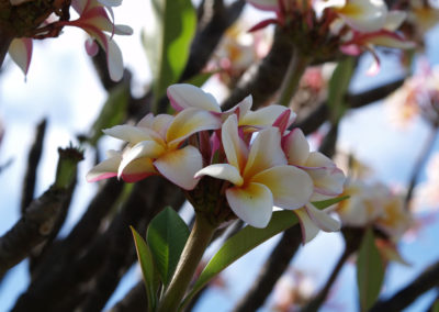 115_Flowers