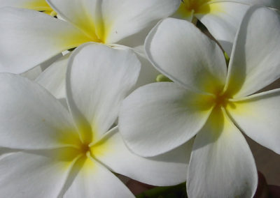 116_Flowers