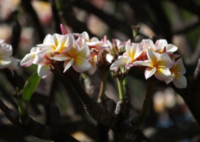 122_Flowers
