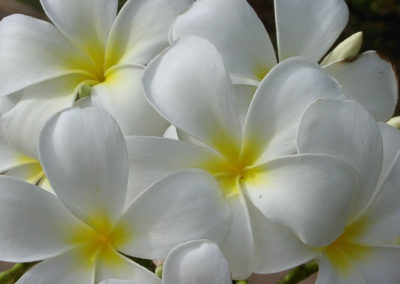 124_Flowers