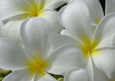 125_Flowers