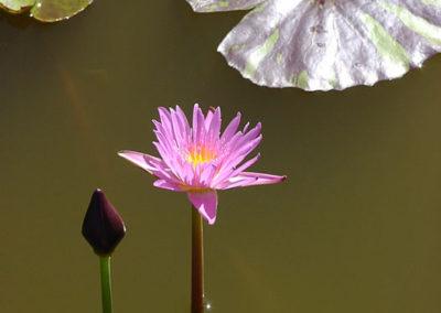 126_Flowers