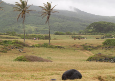 66_Maui