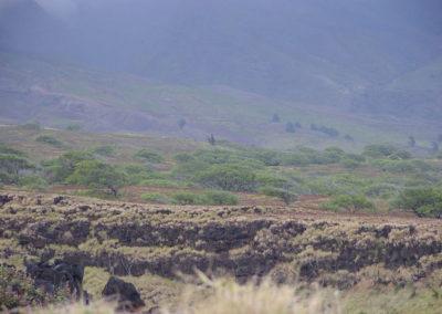 73_Maui