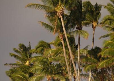 96_Maui